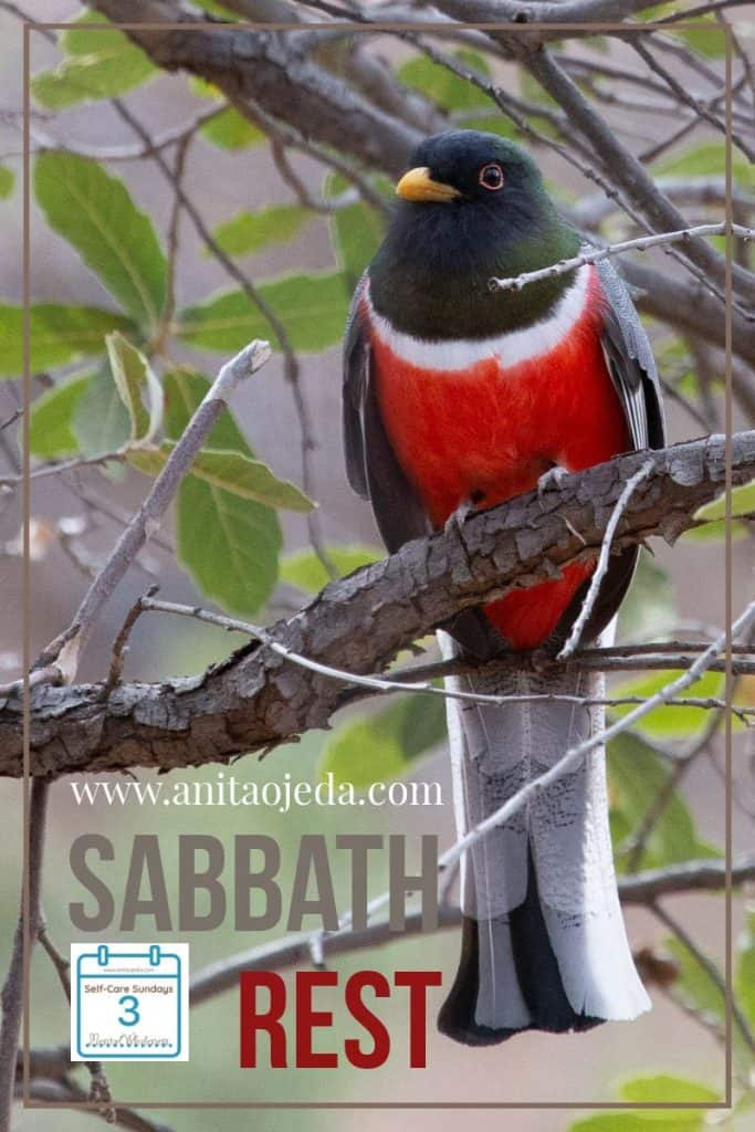 Everybody's talking about it, but everyone finds it difficult to do. No, not organizing your sock drawer. Finding Sabbath rest. Six practical tips for finding the rest your brain needs. #rest #Sabbath #sabbathrest #selfcare